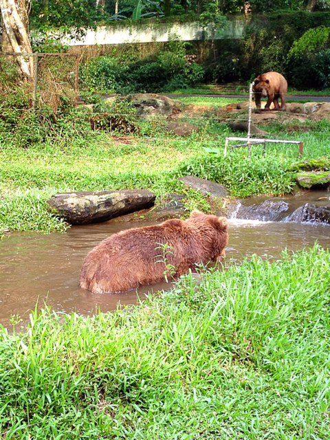 Bears Taman Safari Indonesia