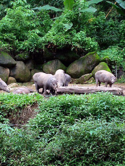 What is This? Taman Safari