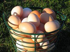 """Basket of organic eggs"" by wattpublishing"
